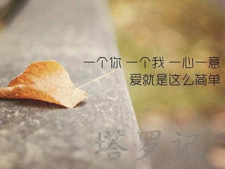 权杖四正位爱情